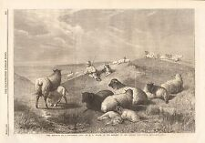 1862 ANTIQUE PRINT-ART-BLESSINGS OF AA SHEPHERD'S LIFE BY H B WILLIS, SHEEP