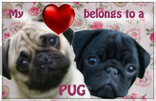 Pugs Fridge Magnet Black Pug Fawn Pug 77x51mm Birthday Gift Xmas Stocking Filler