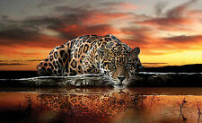 Papier Peint photo Mural 254x184cm Chat sauvage Jaguar pour chambre à coucher &