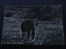 EAST AFRICAN GAME ELEPHANT POSTCARD