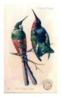 Arm & Hammer Crimson Topaz Blue Tailed Sylph, Victorian Trade Card #10 *VT19
