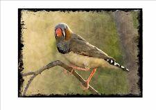 Placa de pared de estilo vintage Zebra Finch jaula Pájaro Aviario signo de imagen