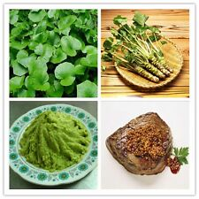 100 Pcs Wasabi Seeds Horseradish Seeds Japanese Vegetable Gifts HOT Gift#