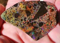 147 ct Solid Heat treated Andamooka Matrix opal Amazing Play of Colour Rough Rub