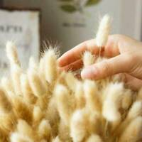 Lots 20Pcs Naturals Dried Pampas Grass Reed Home Wedding Decor Photography Props