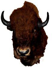 Vintage Herd-Culled Bull Buffalo Shoulder Mount