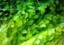 Polyester Fabric - Green - Leaf Hedge Foliage Print - 50cm x 140cm - New by Dcf