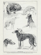 SCOTTISH DEERHOUND IN VARIOUS POSES LOVELY OLD 1934 DOG ART PRINT PAGE