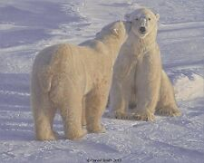"""Season's Greetings"" Daniel Smith Western Fine Art Giclee Canvas - Polar Bears"