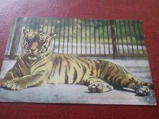 Old Postcard Tiger London Zoological Gardens