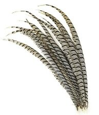 "10 Pieces Lady Amherst CENTER Pheasant Feathers 30-40"" Zebra-Look Halloween/Hat"