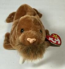 Ty Beanie Babies Paul the Walrus, 1999 Pe Pellets, New with Tags