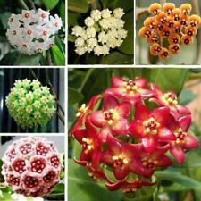 100Pcs / Bag Orchid Flower Mixed Color Hoya Seeds Garden Supplies Decoration