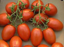 Tomate romaníes Cherry Incluye 50 Mejores Semillas