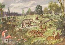 """Prehistoric FLAMINGO & MIOCENE LANDSCAPE Color Print By Z Burian 1963 VF 9x13"""""""
