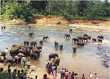 One Sri Lanka Used PICTURE POST CARD with used 5 Stamp, Ceylon,  Elephant Animal