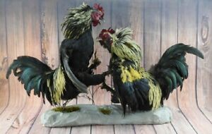 PREMIUM ROOSTER FIGHT TAXIDERMY DUAL GAMECOCK ATTACKING COCK