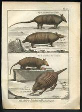 LES DIFFERENTS TATOUS Histoire naturelle gravure aquarellee Buffon 1790