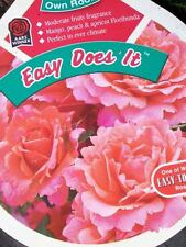 Easy Does It (Ppaf) Peach Pink Rose 3 Gal. Bush Live Plants Plant Healthy Roses