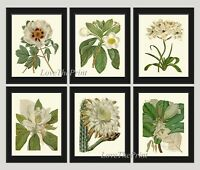 Unframed Botanical White Flowers Wall Art Print Set of 6 Vintage Antique Decor