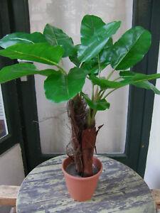 Künstliche Bananenpflanze ca. 80cm Top Qualität Kunstpflanze