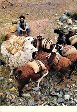 BG21263 llama cuzco peru llamas types folklore