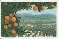A CALIFORNIA VISTA - post-card