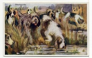 OTTERHOUND DOGS AT WORK  OLD  DOG ART POSTCARD