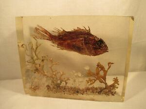 Großes Plexiglas Bild Aquarium mit Fisch 60er Jahre Vintage Maritime Dekoration