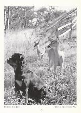"*Postcard-""Friends For Life"" /Dog & Deer Roam Mountains/ *Beech Mt. NC (A30-3)"
