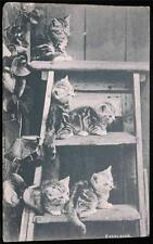 "OLD POSTCARD OF CATS / KITTENS ""EXCELSIOR"" USED 1905"