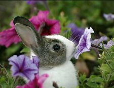BUNNY RABBIT SMELLING THE FLOWERS MOUSE PAD  IMAGE FABRIC TOP RUBBER BACKED
