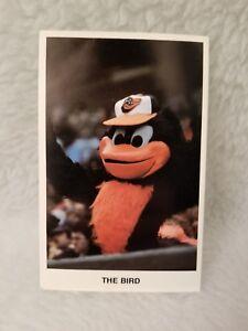 The Bird Baltimore Orioles Photo