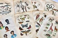 1864 Antique COLOR PLATES: INSECTS/Mammals/BIRDS/Fish/REPTILES/Flowers & MORE