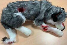 Casualty simulación Husky Perro con 6 heridos