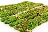 4mm Forest Ground Cover Strips x 10 by WWS - Model Railway Diorama Scenery