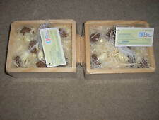 New Play Wonder Mushrooms with Wooden Crate Lot of 2 packages