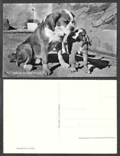 Old Dog Postcard - St. Bernard and Puppy - Real Photo