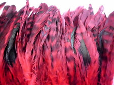 "50 RED CHINCHILLA GRIZZLY ROOSTER TAILS CRAFT MILLINERY FEATHERS 6""-8""L"