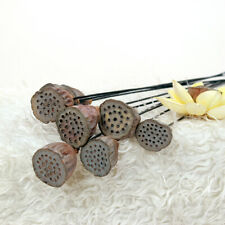 1x Natural Wild Lotus Home Wedding Party Decor Dried Flowers Plant Heigh 55-85cm