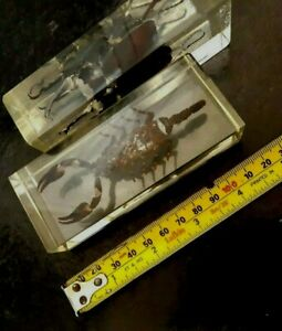 SCORPION AND BEATLE ENCASSED BUG VINTAGE PAPERWEIGHTS HEAVY 4.6 INCHES
