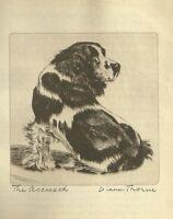Cocker Spaniel - Vintage Dog Print - 1936 Diana Thorne