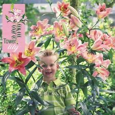 Pack x3 Tower / Skyscraper Lily 'On Stage' WPC Prins Bulbs & Tubers