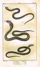 """Lacepede's Oeuvres du Comte - """"LE NAJA - SNAKES"""" - Lithograph - 1833"""