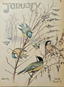 Edith Holden Great Coal and Blue Tit January Birds Botanical Print