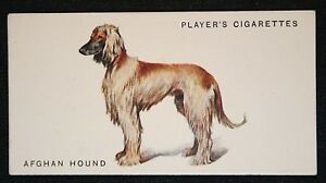 Afghan Hound  by Arthur Wardle     Original 1931 Vintage  Colour Card  # VGC