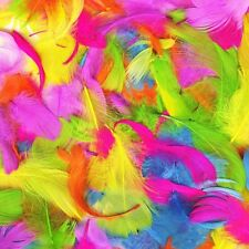 Bright Multicolour Feathers Ideal For Arts & Craft Easter Decoration