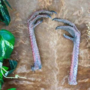 C2 Taxidermy ruffed Grouse feet PAIR foot leg claw craft voodoo dog training collectable specimen talons claws