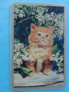 VINTAGE ,  SINGLE , CUTE KITTEN   ; SWAP PLAYING  CARD.