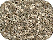 Black Umbonium Small Polished Craft Sea Shells (500 Round Seashells) 100g